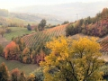 Dezzani's Vineyard